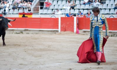 Touro e toureiro