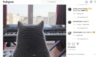 Gato Instagram