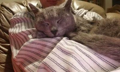 Gato Gandalf Encontrado