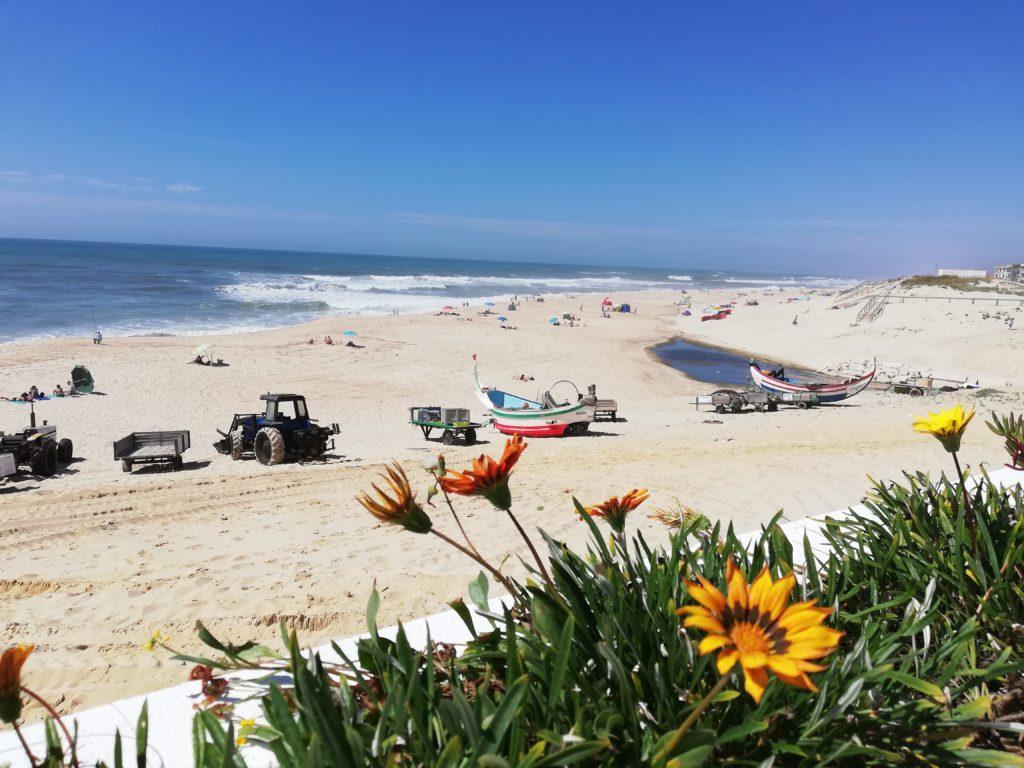 Praia do Pedrógão areal flor