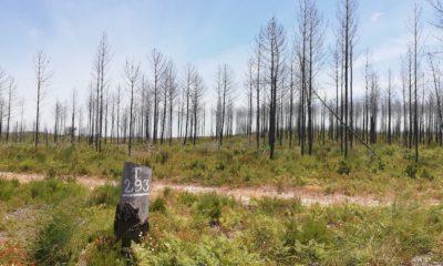 Pinhal de Leiria queimado