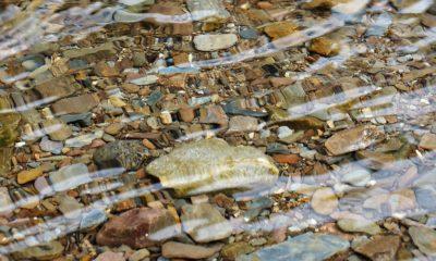 Rio ribeira água