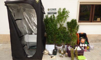 GNR Cannabis
