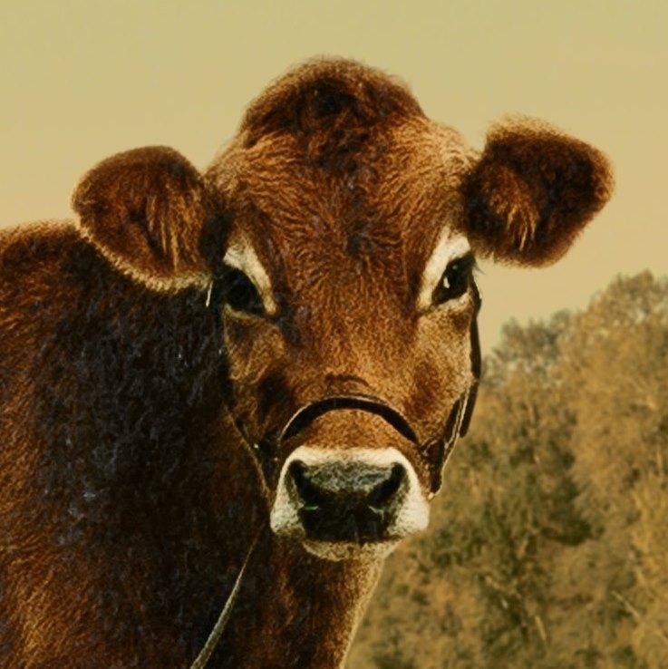 First Cow filme