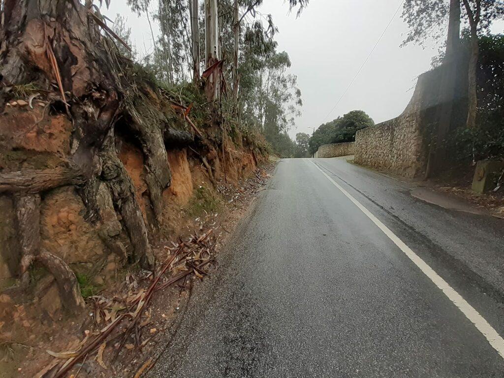 Estrada da Carvalhinha