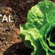 Foto: TAL - Terra Alimenta Leiria